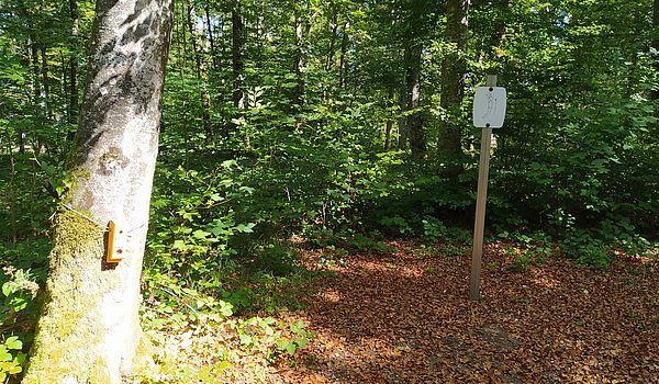 Le parcours permanent d'orientation au bois des Epesses